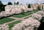 Đại học Washington Seattle